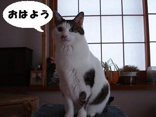Kotaohayo